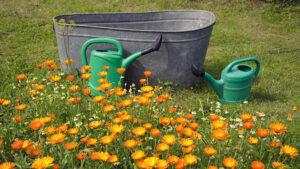 Gieters en bak in een tuin - stilstaand water bron voor muggen